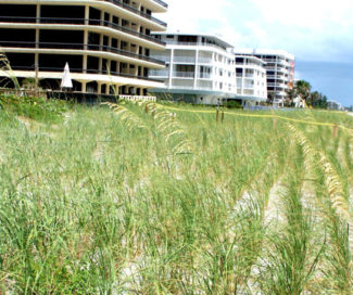 Beach and Coastal Restoration